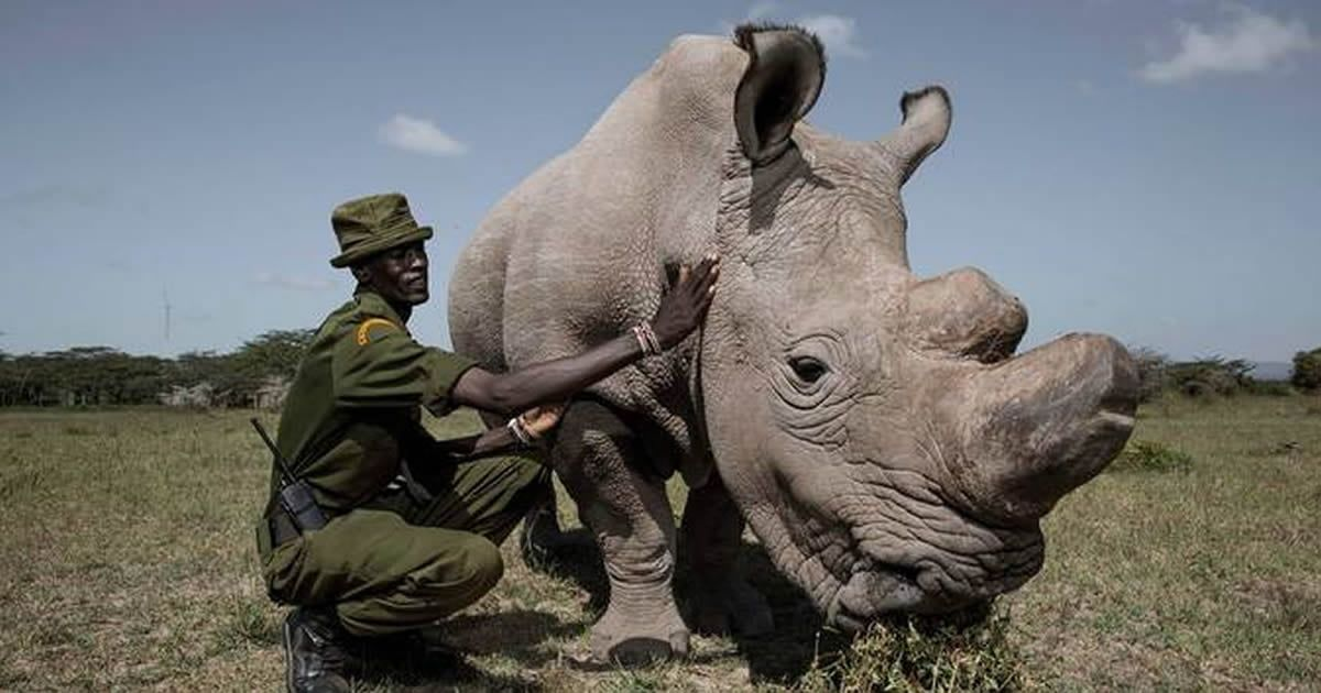 Sudan, World's Last Male Northern White Rhino dies At Age 45 https://t.co/3tdPb5RtJW https://t.co/PGggWfhAfX