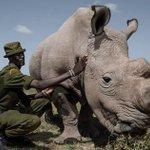 RT @9GAG: Sudan, World's Last Male Northern White...