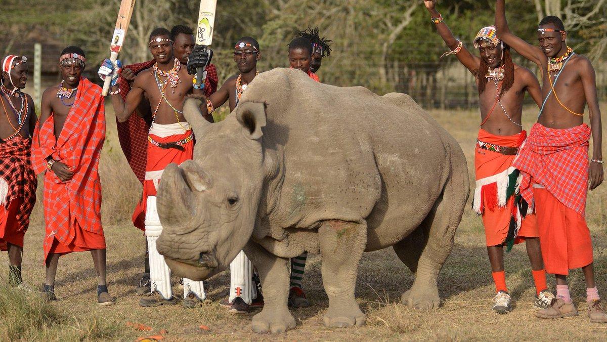 ALERTE INFO - Sudan, le dernier rhinocéros blanc mâle du Nord, est mort https://t.co/ODpSOZf3h5