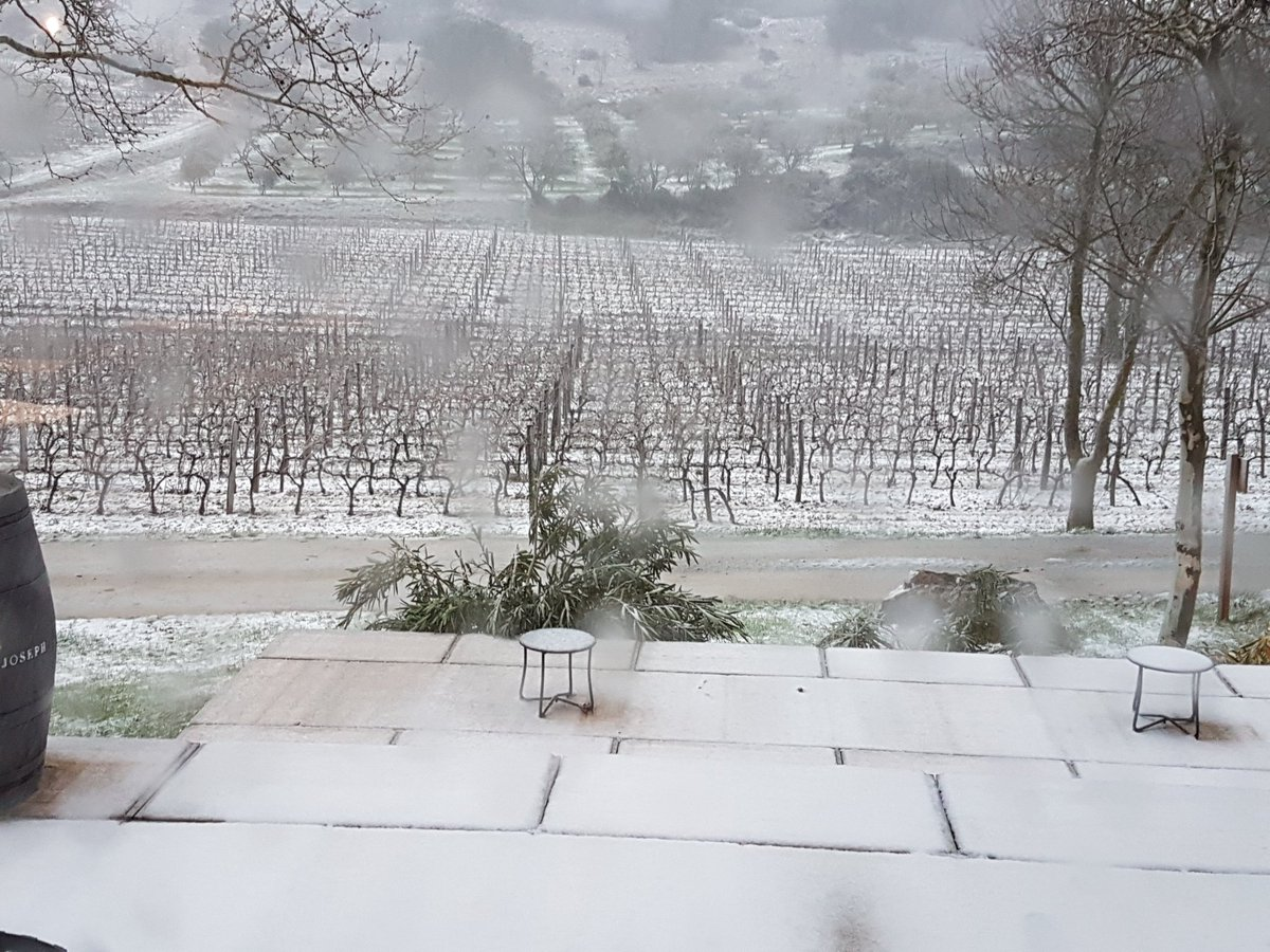 Vines at Calmel & Joseph in the snow!