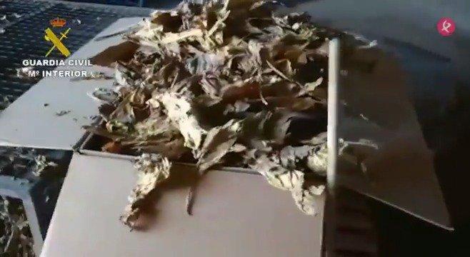 AVANCE | La Guardia Civil detiene a 124 personas en una macrooperación contra el contrabando de tabaco. Es la 2ª fase de la
