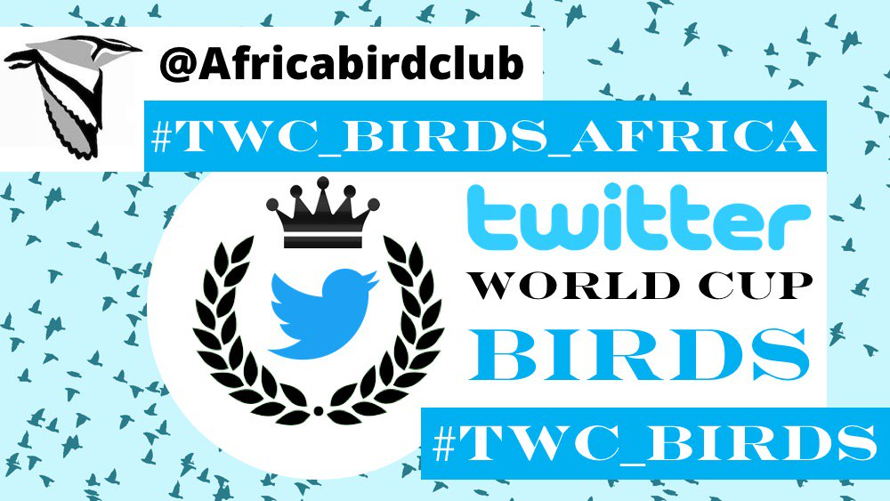 A warm welcome to our Africa #TWC_BIRDS hosts @Africabirdclub! Theyll be tweeting on the #TWC_BIRDS_Africa tag. More details to follow! #ornithology #IOCongress2018 #birds #birding