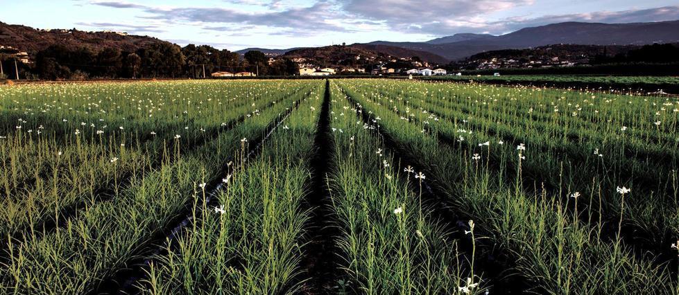 Les oiseaux disparaissent des campagnes françaises  Les oiseaux disparaissent des champs à une vitesse inquiétante. En cause, d'après des chercheurs, les pratiques agricoles et les pesticides >> https://t.co/k0bFAtXjvq