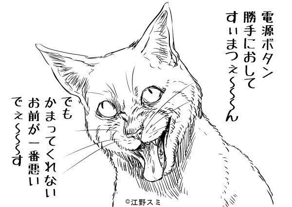 叱られている猫