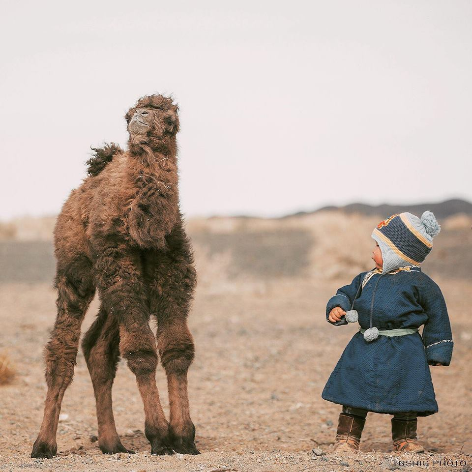 2-year-old little boy & 2-day-old little camel 😍#Mongolia #TravelTuesday photo by @TushigPhoto
