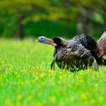 RT @NWTF_official: #firstdayofspring? They must me...