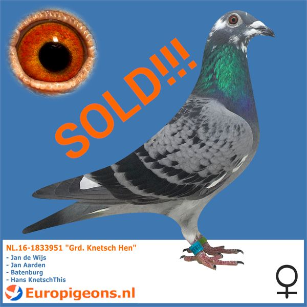 test Twitter Media - SOLD, to Iran Mehran good luck with this great marathon hen also. I am extremely proud to see you coming back to us to make your strain stronger and I even more happy that you choose a hen from my private loft again #europigeons #qualityisachoice #racingpigeons #jandewijs https://t.co/lEPvK7VDav