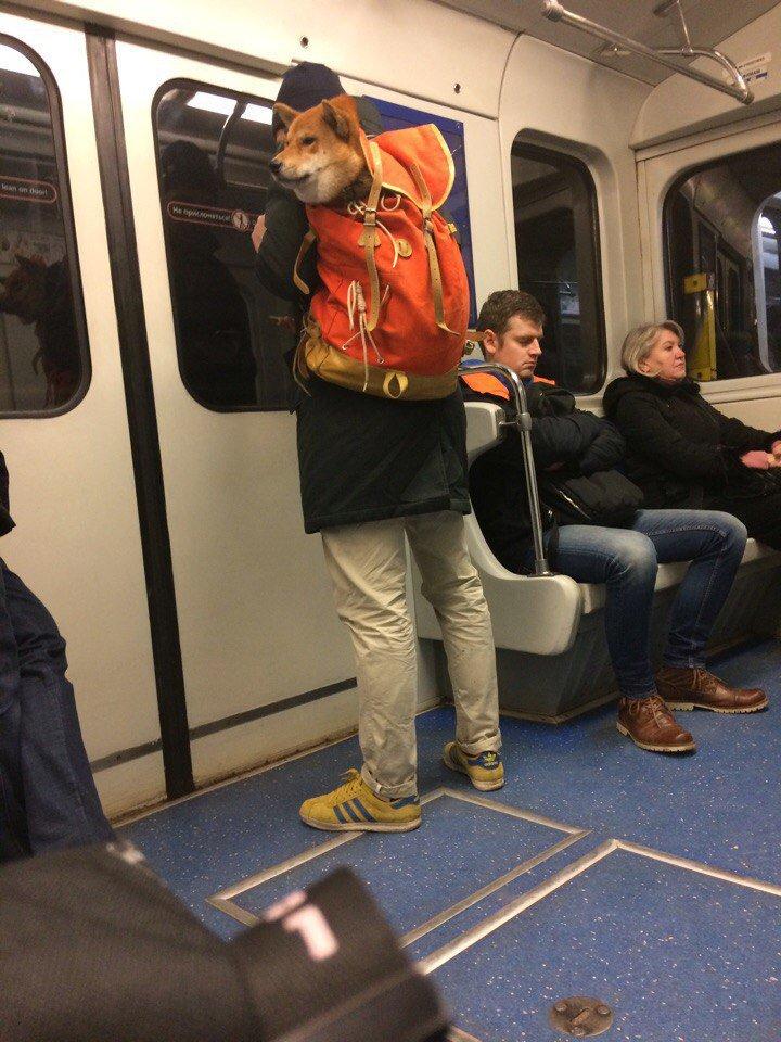 кружевные картинка людей в метро беретик подойдет