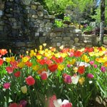 Image for the Tweet beginning: I love #tulips and was