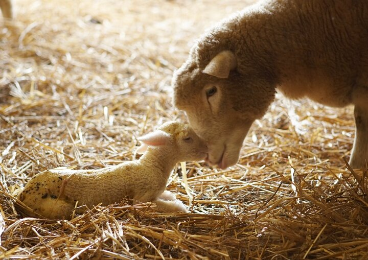 test Twitter Media - Why not spend a Saturday at @TablehurstFarm and @Tablehurstshop? Lambing days at the biodynamic farm are 24th and 31st March. https://t.co/irkyEzPFet #Sussex #farming https://t.co/6P9qUTVLQm