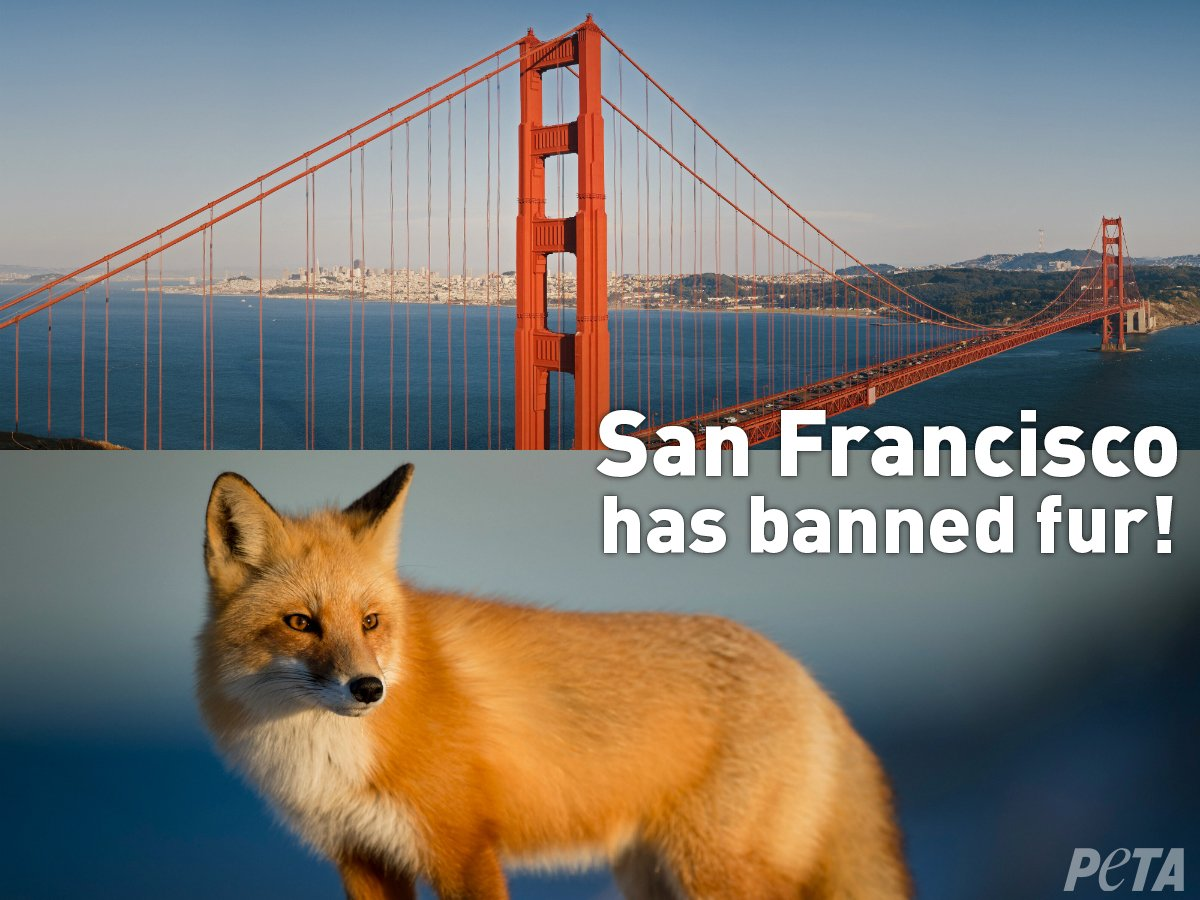BREAKING: #SanFrancisco has banned fur! They are the first major US city to ban fur sales. Everyone is realizing that #FurIsDead. https://t.co/eGxJGiZGn2