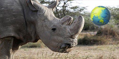 Mais uma notícia triste: agora, só restam duas fêmeas do rinoceronte-branco do norte em todo o mundo! Saiba mais: https://t.co/nIcujiWQND #RIPSudan