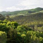 #InternationalDayOfForests