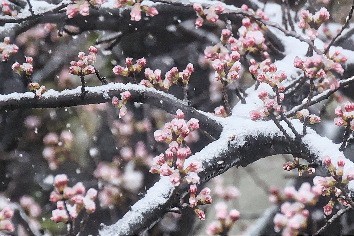 春分の日 🌸&❄️ 季節のバトンタッチ❣️