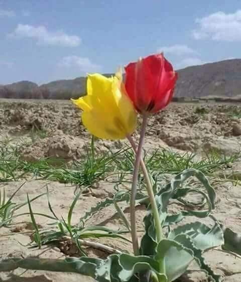 بهار را، سال نو و نوروز را تجليل كنيم و جشن بگيريم.  زيرا بهار و نو روز تجلى از پاكيزگى، طراوت و روشنى است.  در سال جديد تاريكى ، پليدى و زشتى را بايد كنار گذاشت و به سوى روشنايى ، خوشبختى و صلح روى آورد.  بهار يعنى آرامش و صلح سال نو و بهار نو به هموطنان عزيز مبارك
