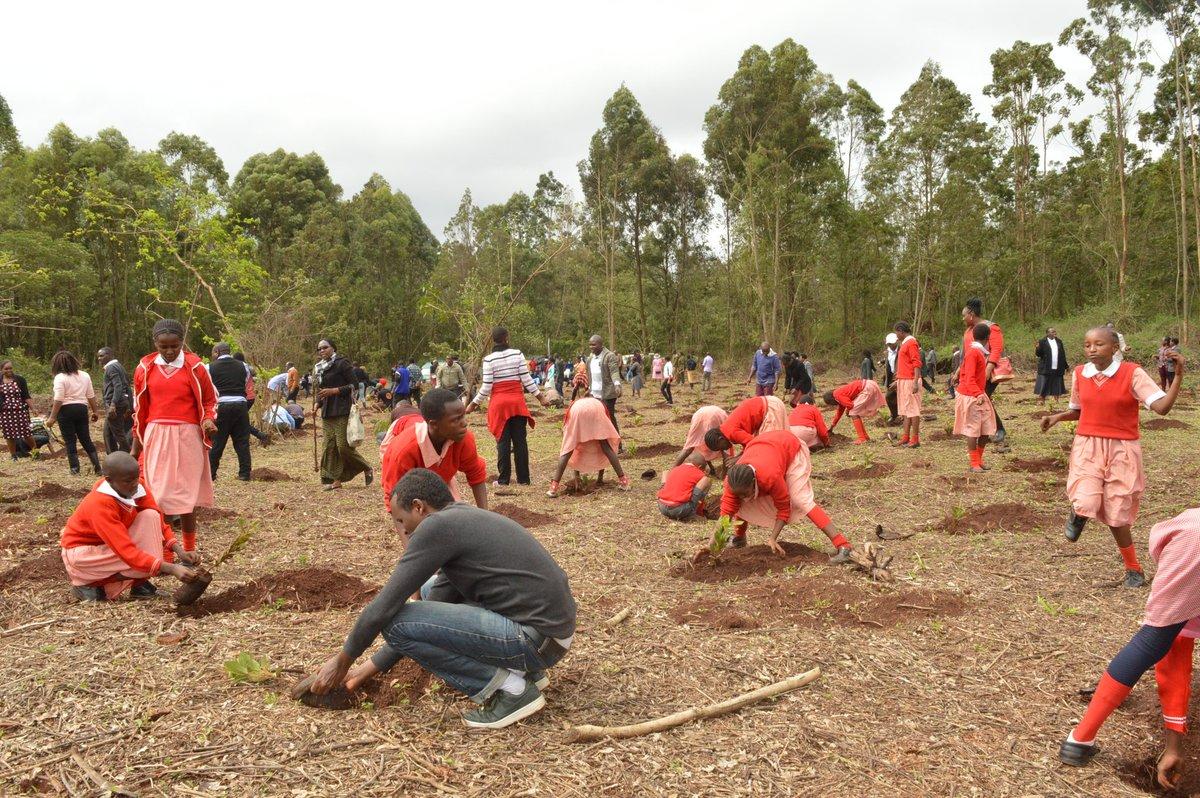 Beautiful day at Karura forest as we mark #InternationalDayOfForests #IDF2018KE #IntlForestDay