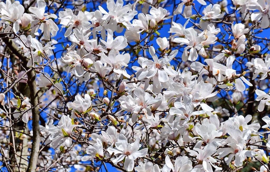 фото весна в апреле когда все цветет фоне