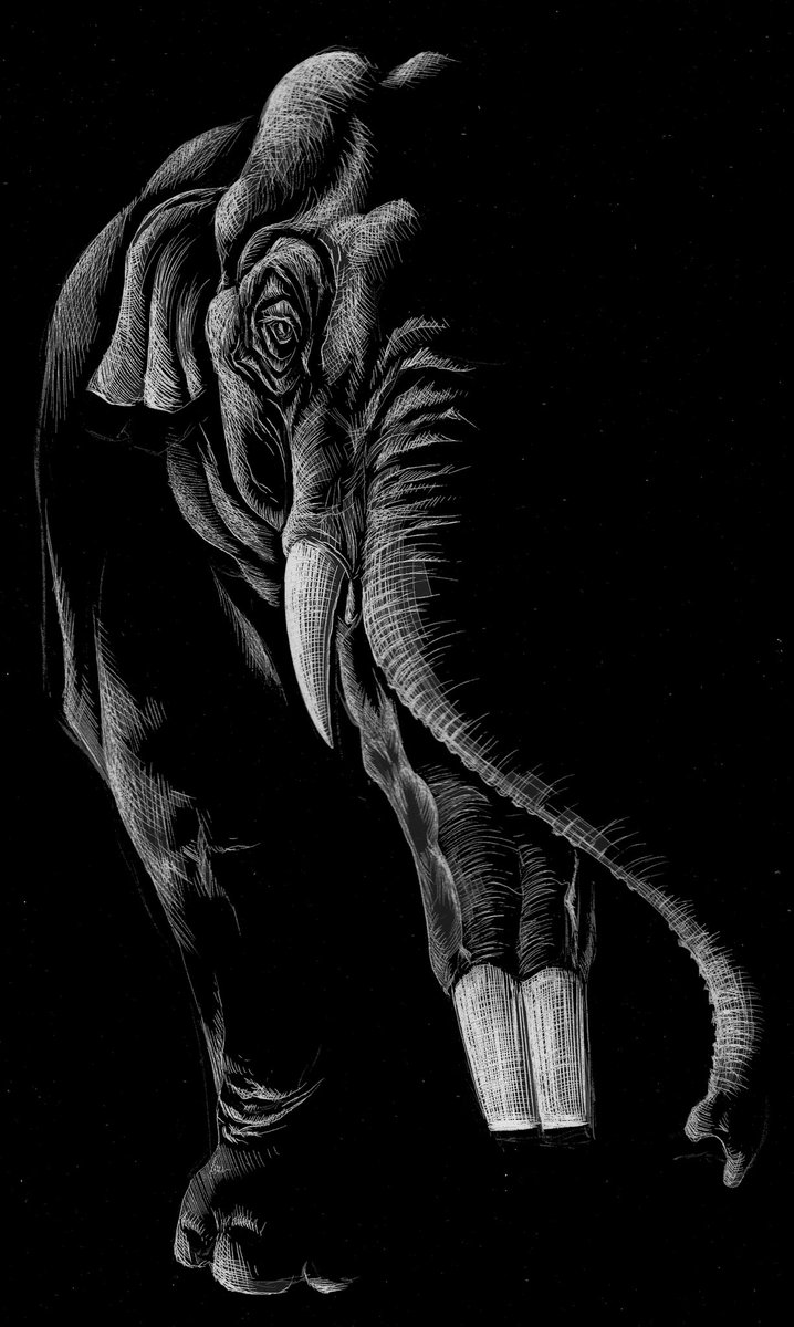 Amebelodon face, black and white etching