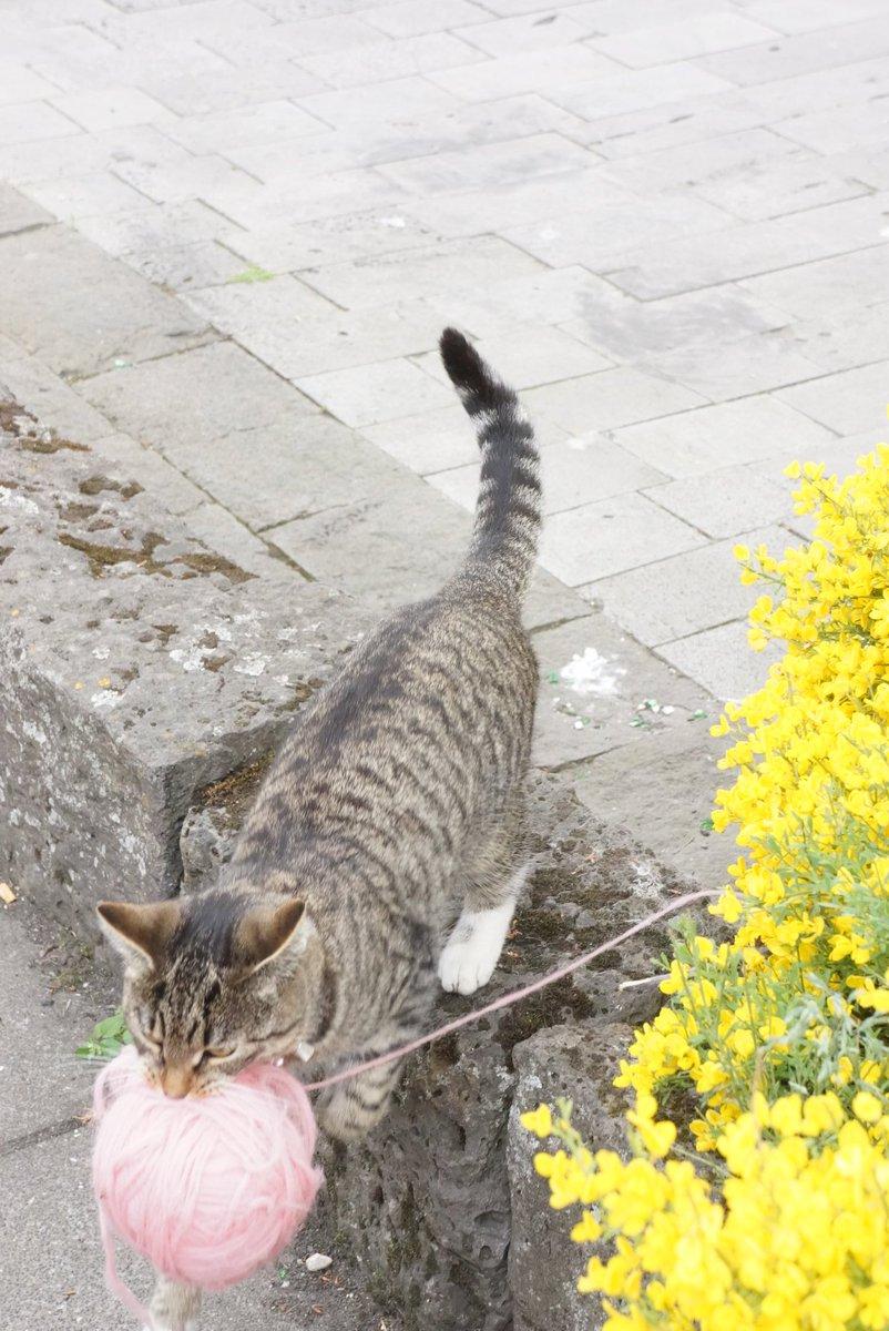 ふわふわの毛糸の束をくわえて持ち去る猫がメルヘンでかわいすぎるw