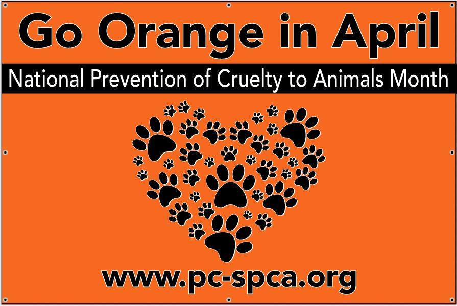 April is Prevention of Cruelty to Animals month!  Please support your local animal welfare organization by wearing orange, donating, volunteering or reporting cruelty and neglect. In @passaic_county please call (973) 773-0459 to file a report. #ItTakesAVillage #StopAnimalCruelty