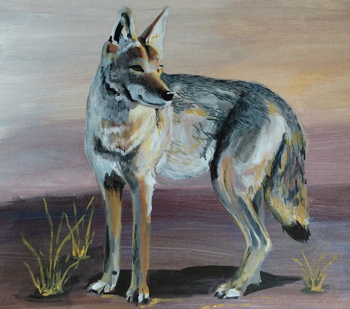 painting of a coyote, full body in profile