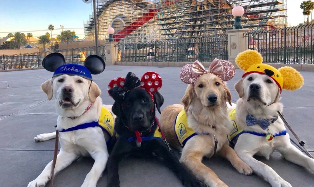 Service dogs go on a field trip to Disneyland.