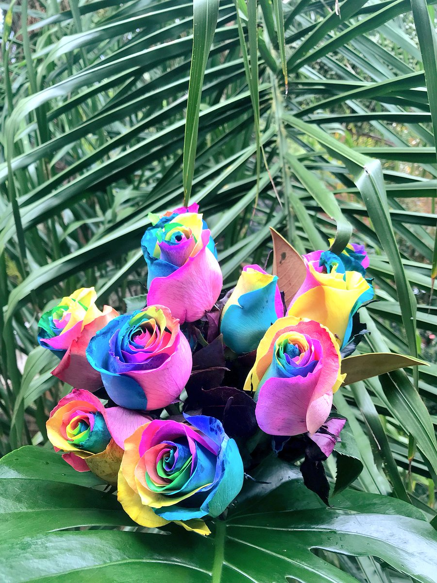 Fiona On Twitter My Girl Sent Me Rainbow Roses For Our