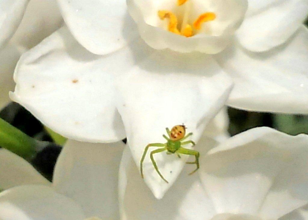都市伝説の小さいおじさんが!?コラ画像にしか思えない面白クモがすぐそこにwww