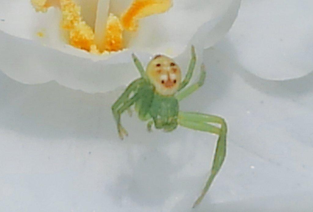 陽気なオジサンの顔した蜘蛛がいました。