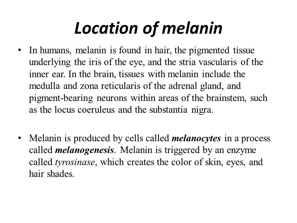 hvad er melanin