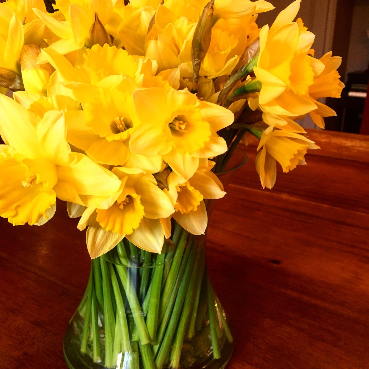 Sarah Beeny On Twitter My Absolute Favourite Spring Flower Some
