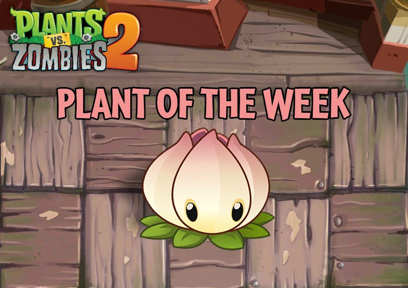 Official PvZ Wiki on Twitter: