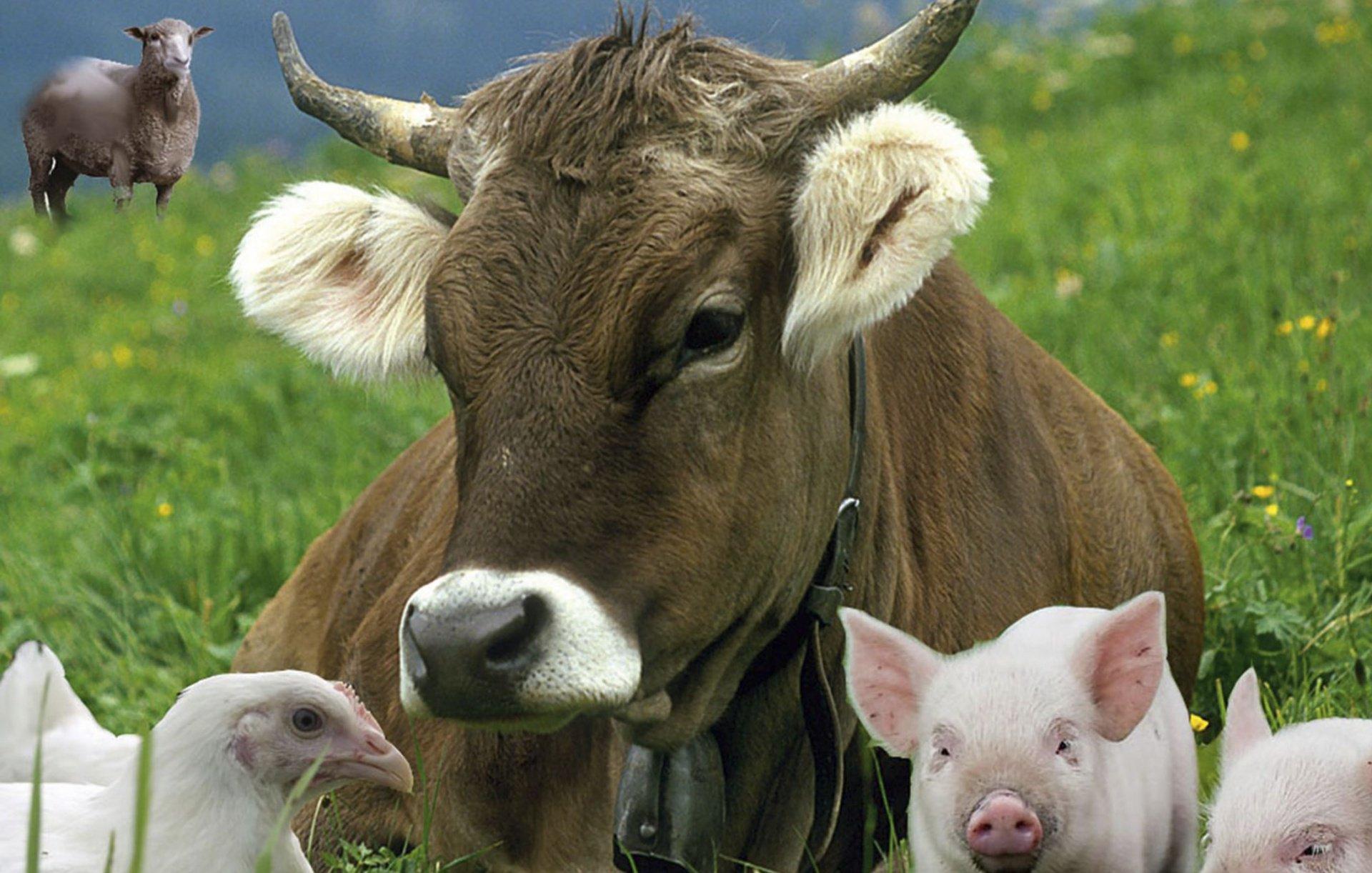Картинки сельского хозяйства животных на прайс лист, работников