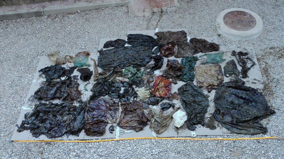 basura encontrada en su aparato digestivo