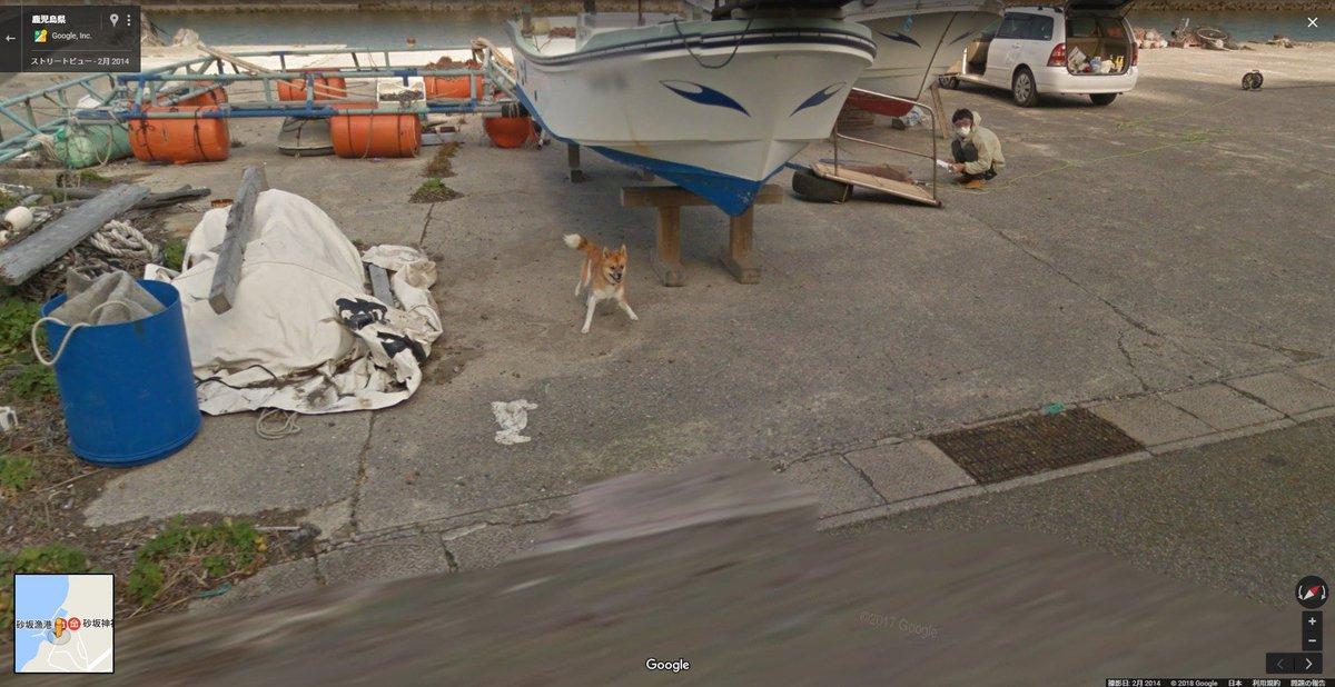 種子島をストリートビューで見てたら放し飼いのイッヌにgoogleカー追いかけられてたの見つけた