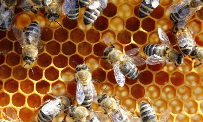 Mulher tem derrame cerebral e morre após terapia com picadas de abelha. https://t.co/l518GVG2ks