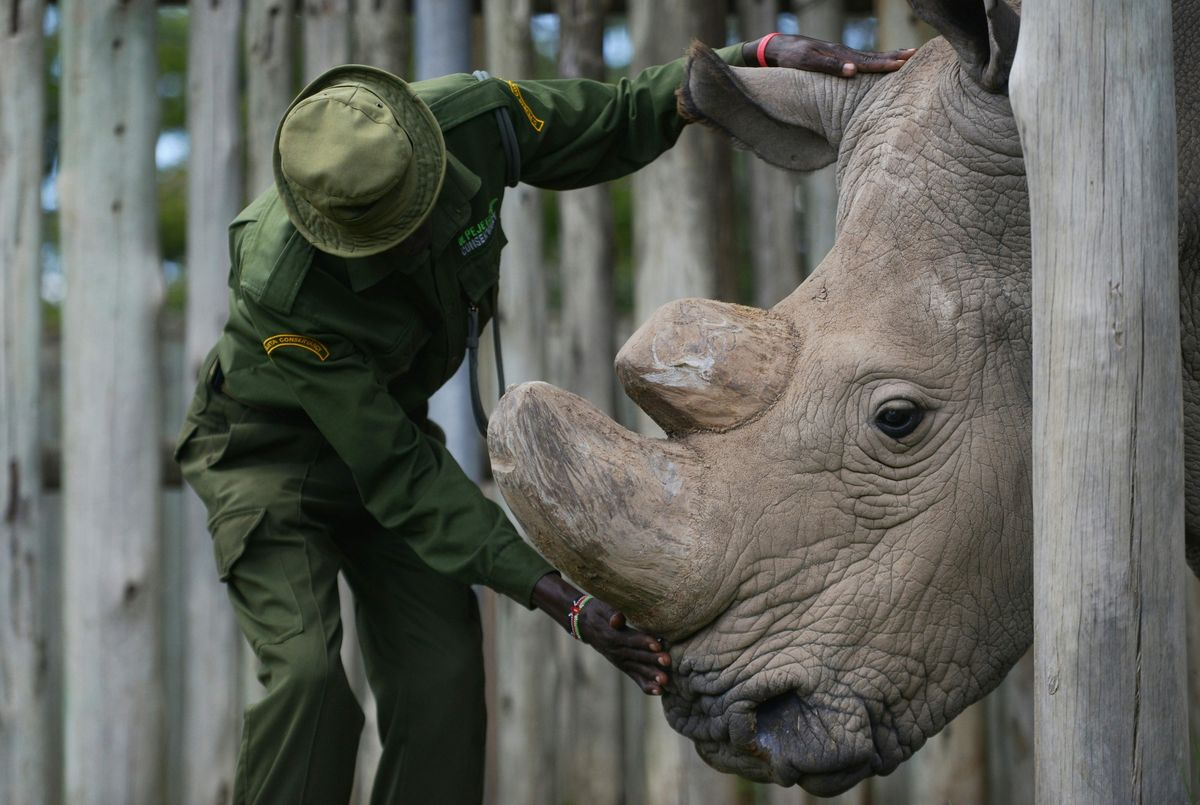 The world's last male northern white rhino has died https://t.co/uY4tlwu9XR
