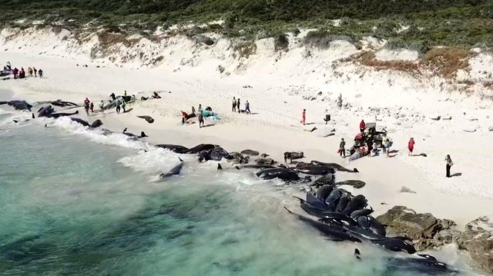 #FOTOS Encallan más de 150 ballenas en playa de Australia https://t.co/lhEnC4rUhv