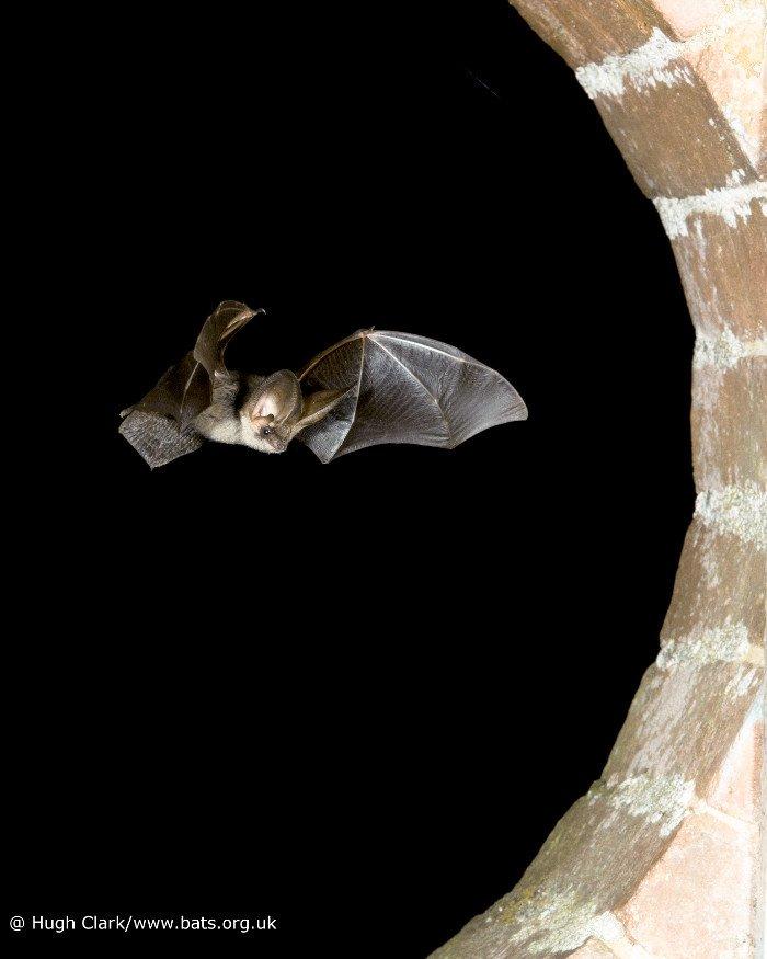 Batconservationtrust
