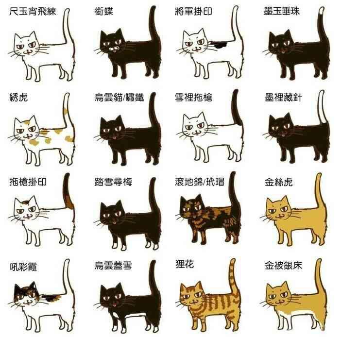 知り合いから回ってきた画像。出典不明。古代中国での、猫の模様の名前らしいです。モノリンガルなネイティヴポンニチとしては「踏雪尋梅」「烏雲蓋雪」「墨玉垂珠」とかは何となく意味の想像がついて風流。金被銀床のゴージャス感よ。