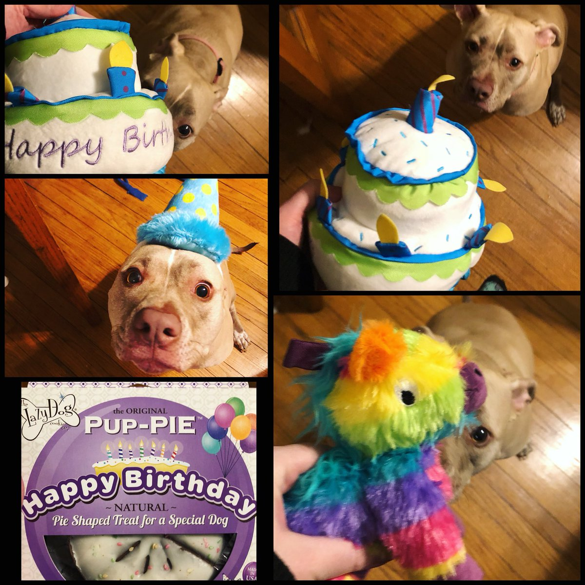 A Dog Toy Cake Pinata And Special Birthday Can You Tell My Is Spoiled Barkshop Barkbox