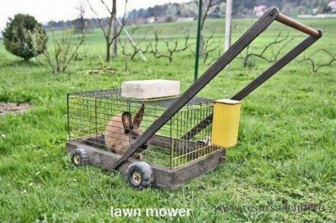 �� BéA @BeA_TSTM une dizaine de lapin pour tondre ta pelouse et hop tranquille �� https://t.co/GOqKlCA2Ml