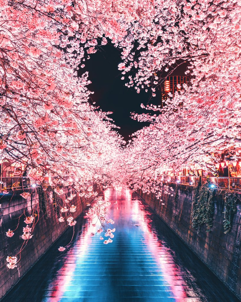 目黒川の夜桜で撮ったハート
