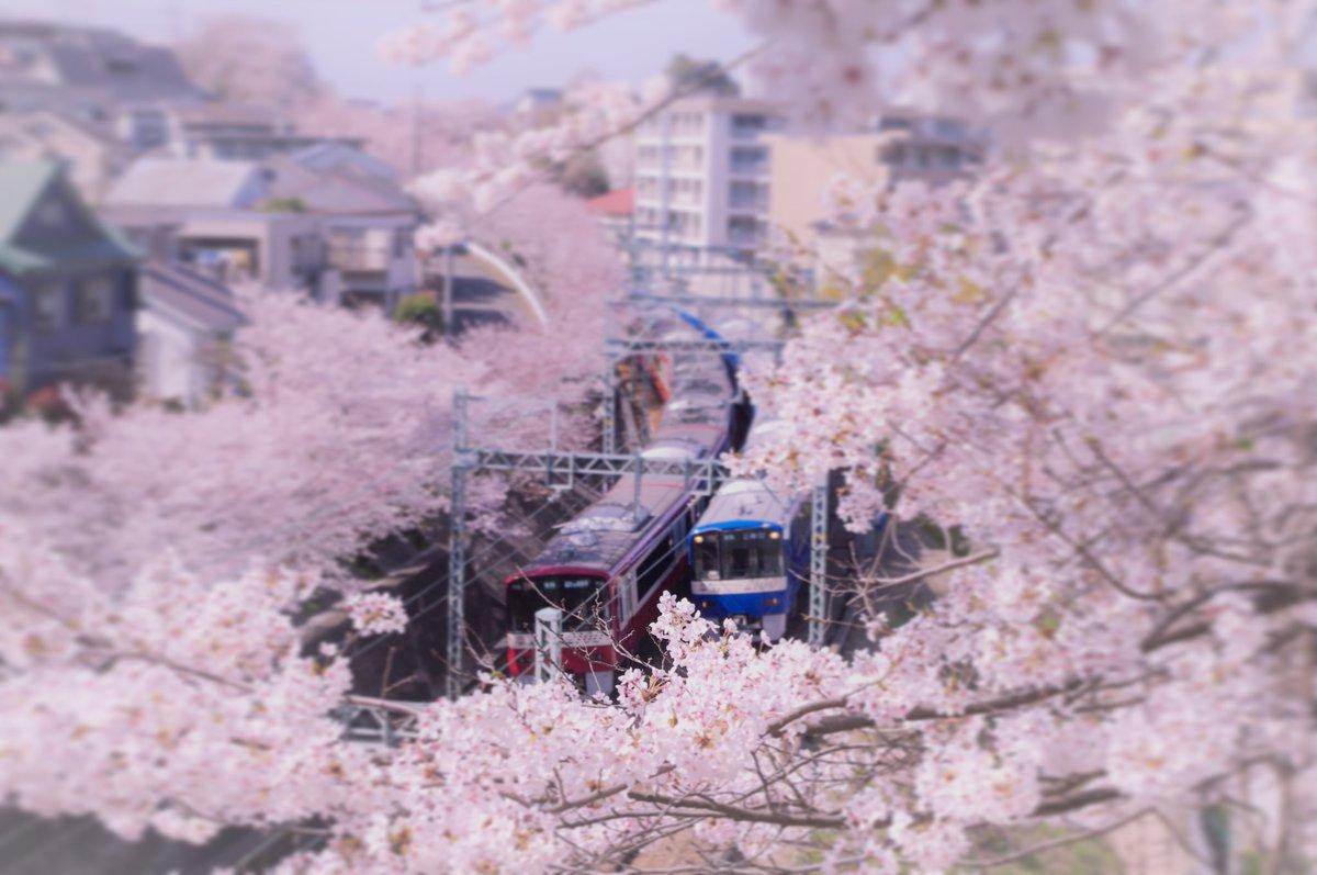 IWAKIYA1 photo