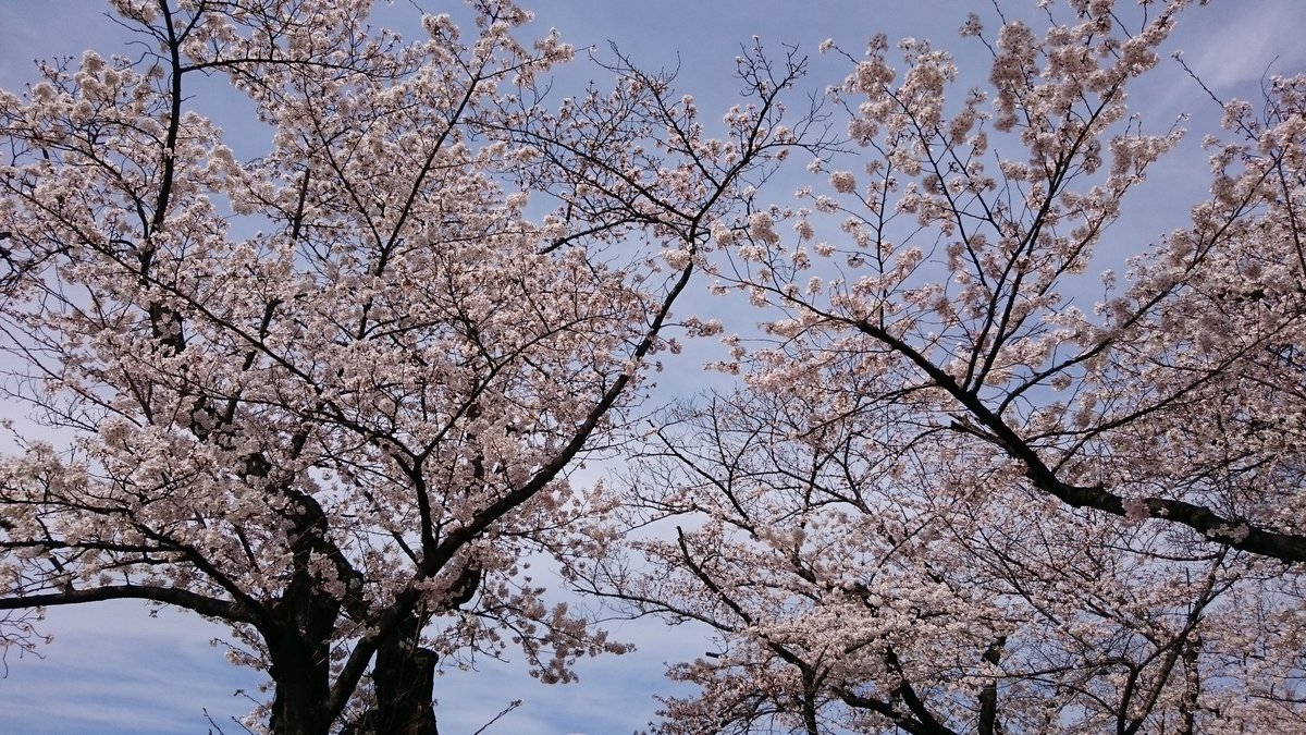 今年も家族3人で春のとしまえん!東京は染井吉野が満開!