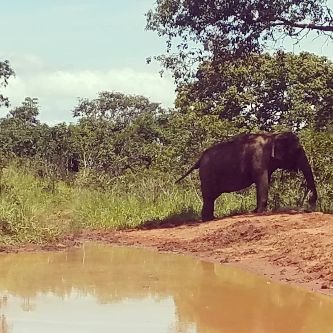 f05c85b326fb8 Her self-confidence continues to grow. #elephant #elephantsanctuarybrazil  https://buff.ly/2DkhKhk pic.twitter.com/34lFG8lBQo
