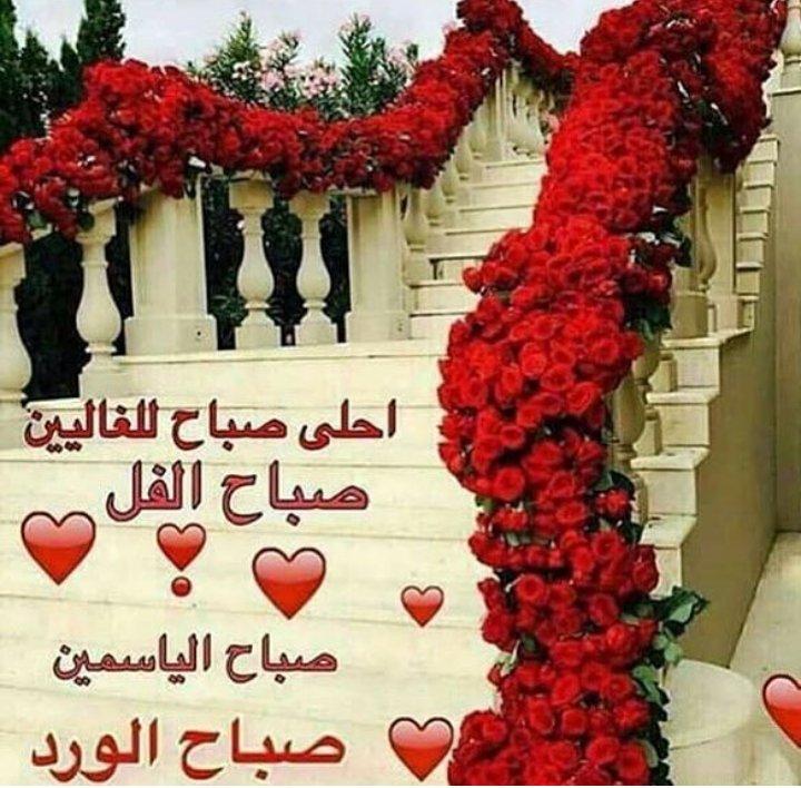 صباح الورد والياسمين صباح 5