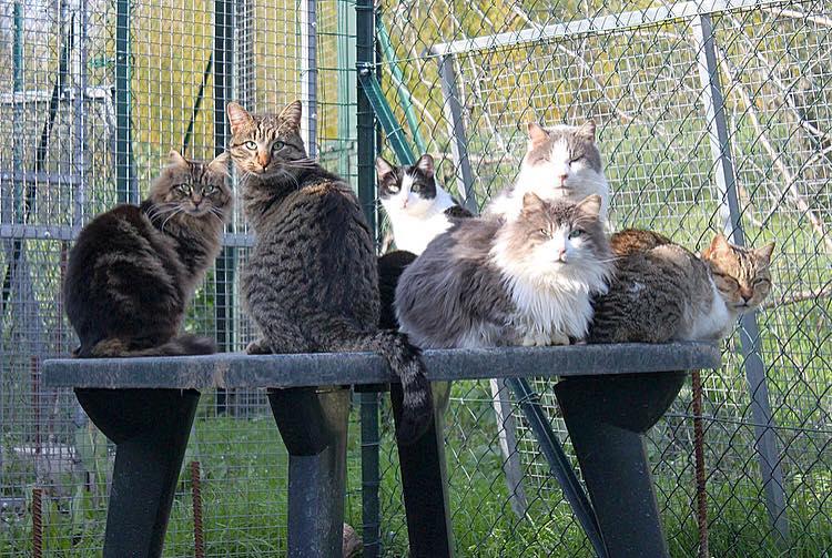 Gattile bagno a ripoli il meglio di l orto dei pelosi novembre