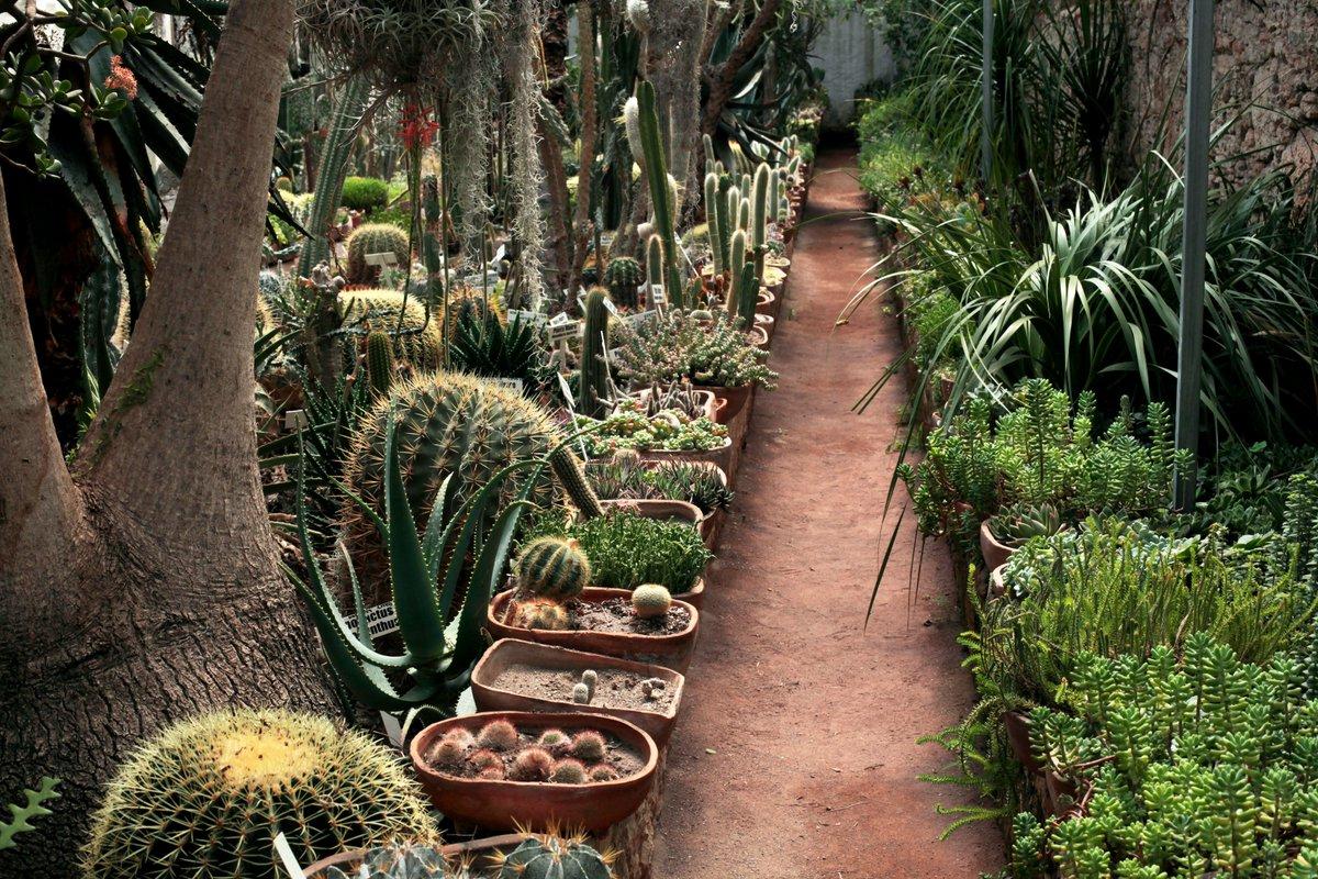 """Gobierno Querétaro Twitterren: """"En los invernaderos de Fernando Schmoll y  el Jardín Botánico Regional de Cadereyta se estarán realizando recorridos  guiados del 27 de marzo al 1 de abril. Escápate al Campamento"""