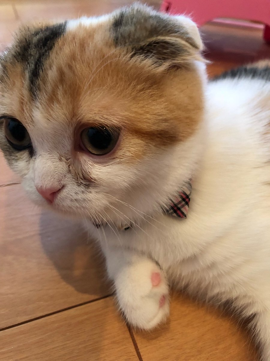 子猫 目やに